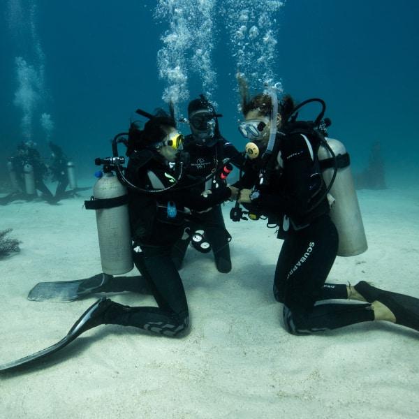 Learn Scuba Diving Padi Open Water Utila Dive Centre