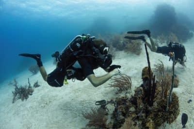 PADI CCR Instructor course Rebreather Utila Caribbean Bay Islands Honduras